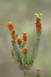 Nature texture green.