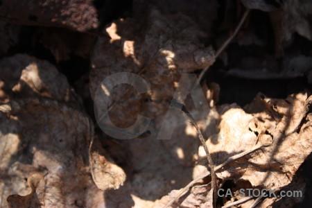 Nature texture leaf.