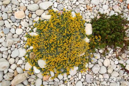 Nature texture yellow white green.