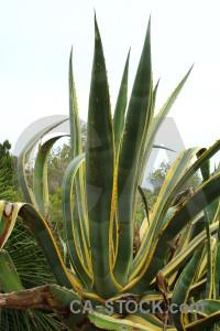 Nature white texture yellow cactus.