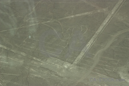 Nazca geoglyph animal flying south america.
