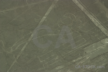 Nazca lines geoglyph animal flying unesco.