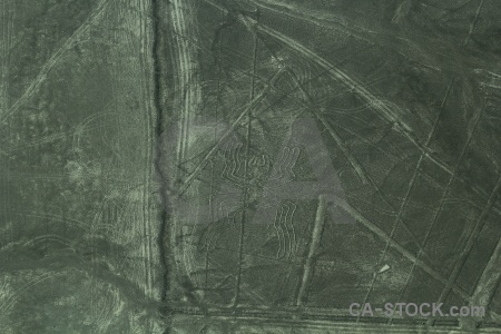 Nazca south america animal aerial unesco.