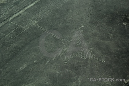 Nazca south america peru unesco animal.