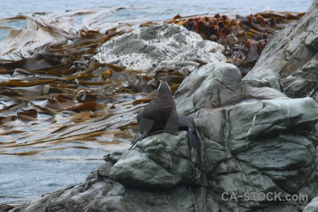 New zealand animal south island water sea.