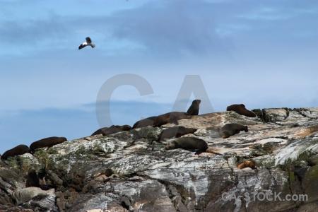 New zealand fiord sky fiordland doubtful sound.