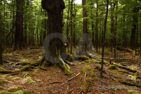 New zealand lake sylvan trek south island tree root.