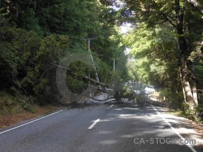 New zealand south island tree road block.