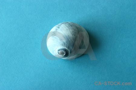 Object cyan shell.