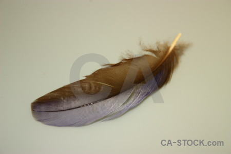 Object feather.