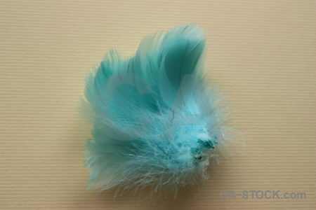 Object feather cyan.