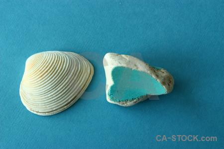 Object shell cyan.