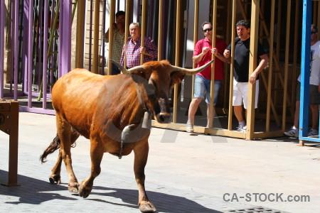 Orange europe bull running animal spain.