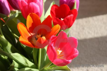 Orange flower plant red pink.