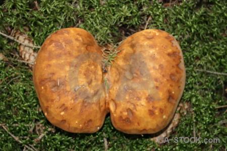 Orange fungus mushroom green toadstool.