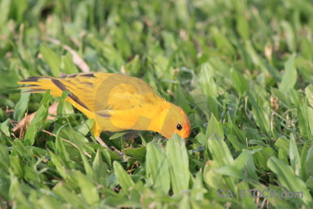 Orange green animal yellow bird.