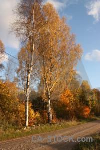Orange path tree brown.