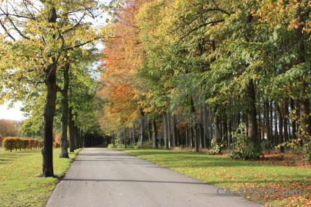 Orange path yellow tree green.