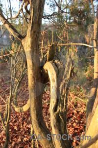 Orange tree brown branch.