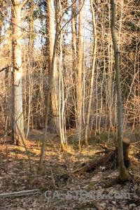 Orange tree brown forest.