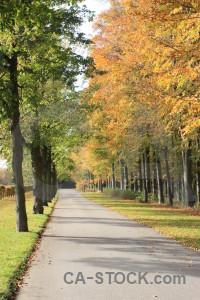 Orange yellow tree green path.