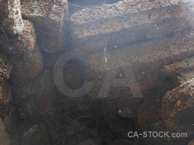 Orb weaver southeast asia cambodia unesco banteay kdei.