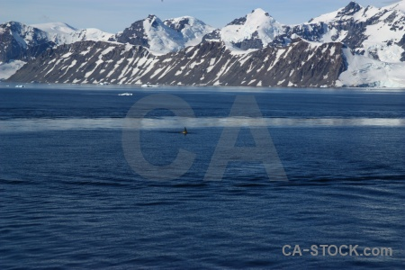 Orca south pole snowcap whale animal.
