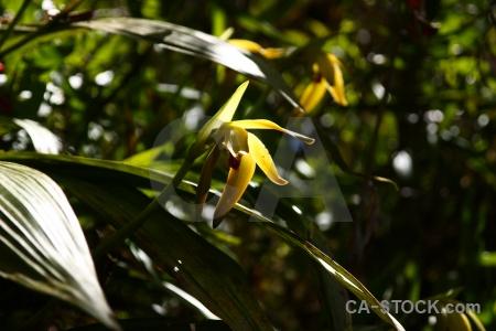 Orchid peru flower inca plant.