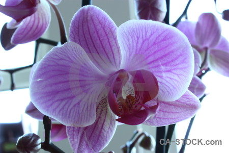 Orchid white purple flower plant.