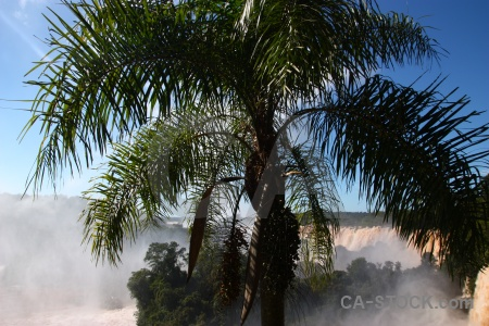 Palm tree iguazu falls iguacu south america river.