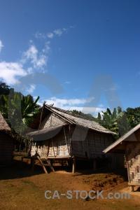 Palm tree luang prabang houay fai southeast asia hut.