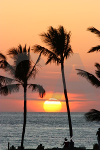 Palm tree silhouette sunset sky sun.