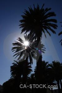 Palm tree sky peru arequipa sun.