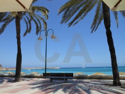 Palm tree spain javea europe sky.