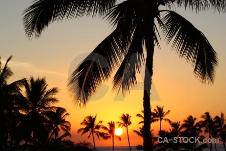 Palm tree sunset single silhouette sky.