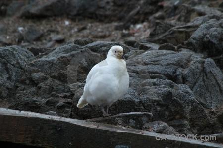 Palmer archipelago antarctic peninsula antarctica goudier island animal.