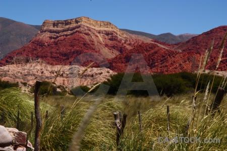 Pampas grass jujuy yacoraite salta tour argentina.