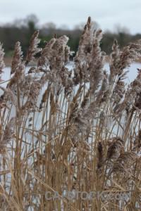 Pampas grass white plant.