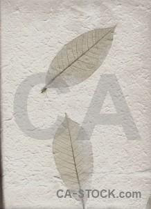 Paper nature texture.