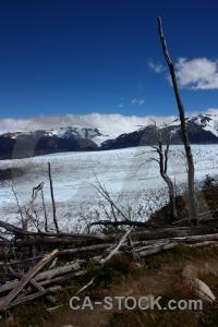 Patagonia circuit trek forest trunk dead.