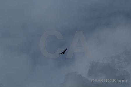 Patagonia cloud trek animal circuit.