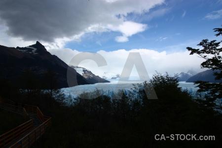 Patagonia glacier ice tree perito moreno.