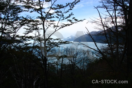 Patagonia ice sky mountain tree.