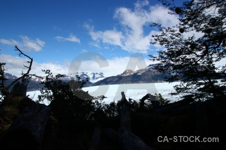 Patagonia mountain tree south america ice.