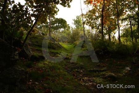 Path forest tree black.