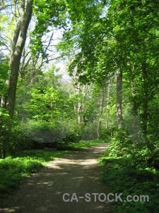 Path green tree.