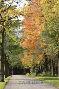 Path green yellow orange tree.