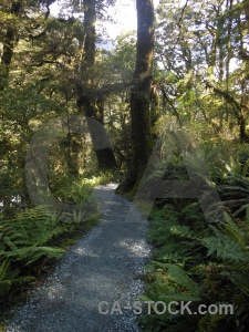 Path new zealand forest furn plant.
