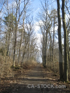 Path tree.