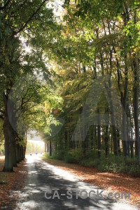 Path tree green.